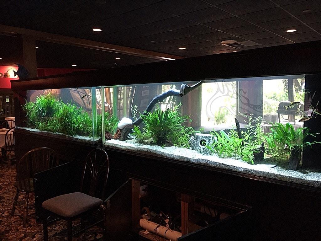 Aquarium Installation And Aquarium Services Neas